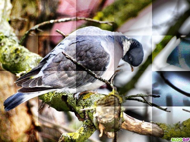 image-animaux-marie-cheval-pigeon