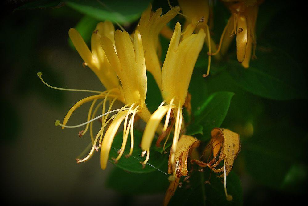 fleurs-0072.JPG