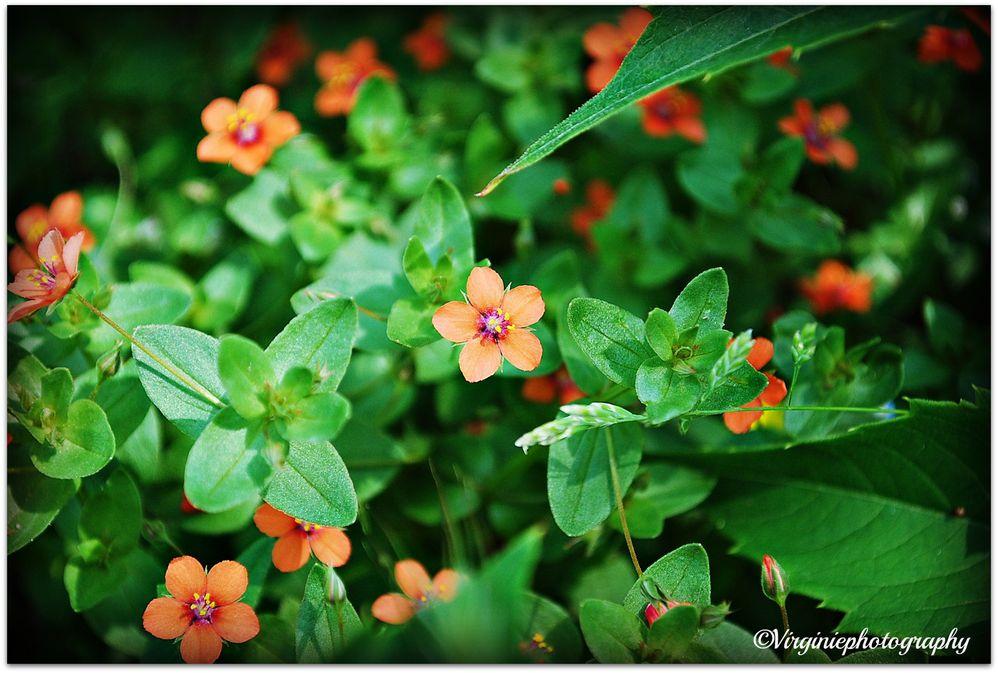 fleurs-0015-copie-2.JPG