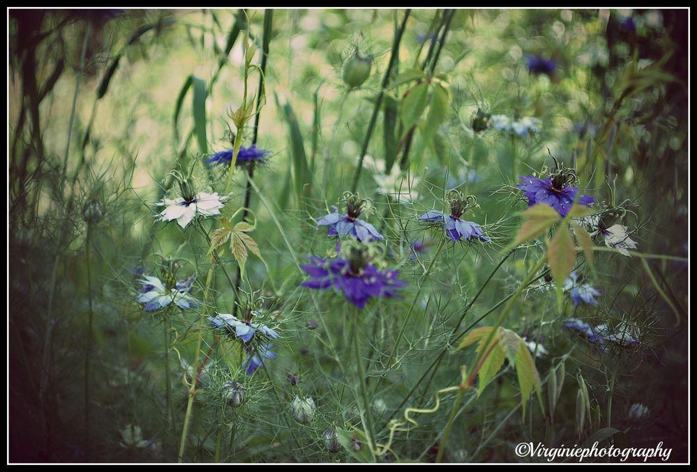 fleurs-0019.JPG