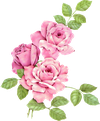 3Roses-pink.png