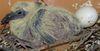 pigeonneau_colombiforme.jpg