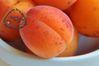 abricots logo