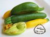 Courgettes petites