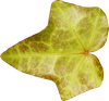 lalig_autumn_element34.png
