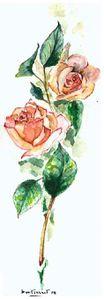Roses en duo