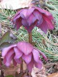 botanique4.JPG