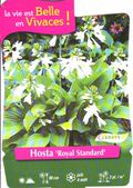 Hosta-Royal-Standard.jpg