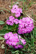 Fleurs-et-Papillons_0596-copie-1.jpg