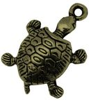new tortue