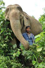 éléphant et son cornac Photo Traer Scott