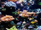 Coral decline warns of ocean changes: australian scientists