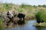 parc naturel regional de briere (99)
