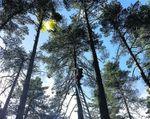 haut-d-un-arbre.jpg