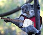 Un koala joue de la guitare éléctrique + penguin fail - 2 videos