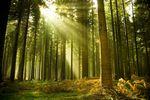 Forum franco-québécois Bois et Forêt : Des échanges pour une filière plus forte