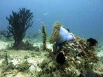 Voyage-plongée: paysage sous-marin, Anémone et corail