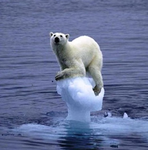 Global warming fraud: Iconic polar bear on melting ice cap a hoax