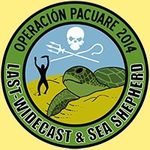 societe-civile-seashepherd-tortue.jpg