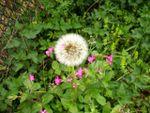 1er mai à Gaudeix, MAP fleurs et papillons