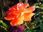 Taguée en orange par Lady Marianne...