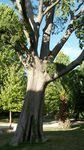 Pourquoi les arbres nous font-ils tant de bien ?