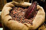 Dossier/ Réforme de la filière café-cacao : Les grosses inquiétudes des producteurs