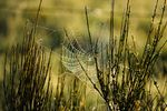 spider in the morning by albi (nikon d3x)