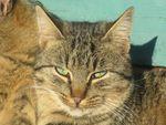 Comment soigner la diarrhée d'un chat?