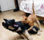 Un chat met une raclée à un chien pacifique (vidéo)