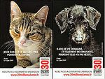 abandons-chiens-et-chats.jpg