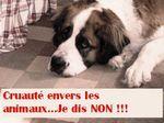 8 mois de prison ferme pour un Polonais qui a cruellement tué son chien