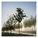 19 Roger Lainé - Arbres et brume