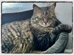 King Kat, trop dure la vie le lundi au soleil