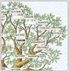 arbreGen_31.jpg