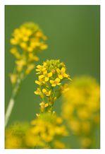 Plantes & fleurs © Olivier Roberjot 12