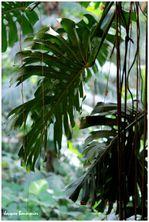 Grandes serres jardin des plantes 34