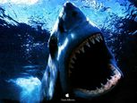 Requin