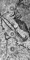paleo astro HOMME COUCHE LASCAUX compressé bison de feli