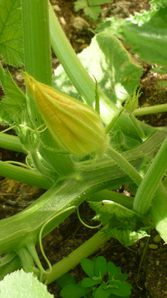 courgettes3.jpg