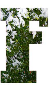 Lettrine (F OurGang jardin sous la neige) - le carnet de Ji