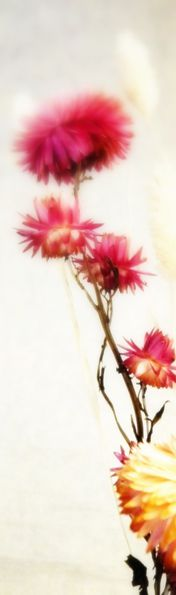 fleurs séchées V11