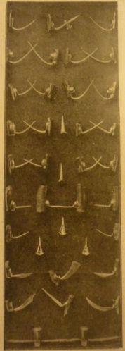 La Vie illustrée, n°23, 23.03.1899, Coqs de Combat3