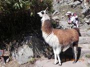 AmSud 2010 - J11 - Machu Picchu - JD 087