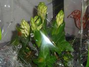 boutique bouquet vegetal