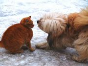 465036_cat_vs_dog-1-.jpg