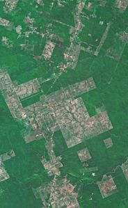 deforestation spot 1986