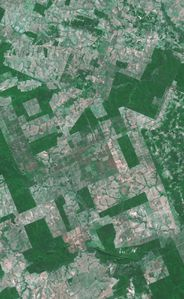 deforestation spot 1998