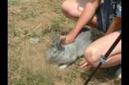 Photo activites nature - enfant caressant le lapin a la ferme ped
