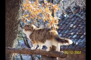 Photo animal domestique - chat sur la barriere